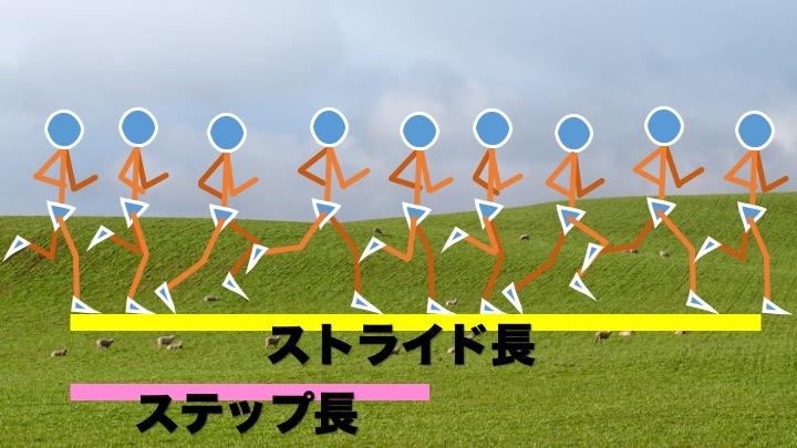 走動作のサイクル